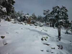 P1100558Foto nieve