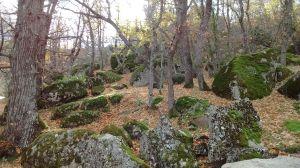 Bosque Herrería